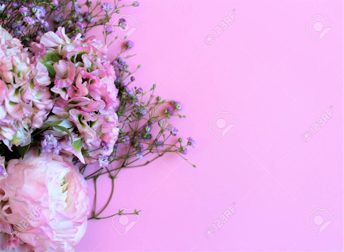 Light pink flowers (Ranunculus) on a pink background. Background for greetings, invitations, cards. - 122184394