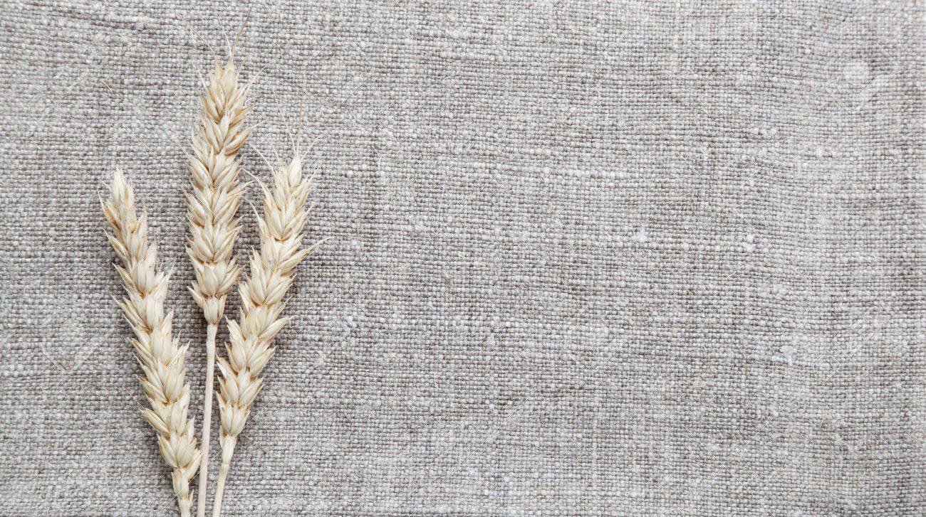 Ears of wheat on the canvas. - 14860756