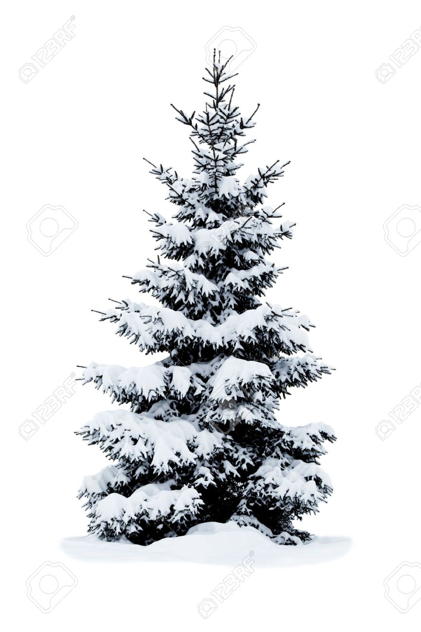Christmas Tree Covered With Snow Isolated On White Background Stock
