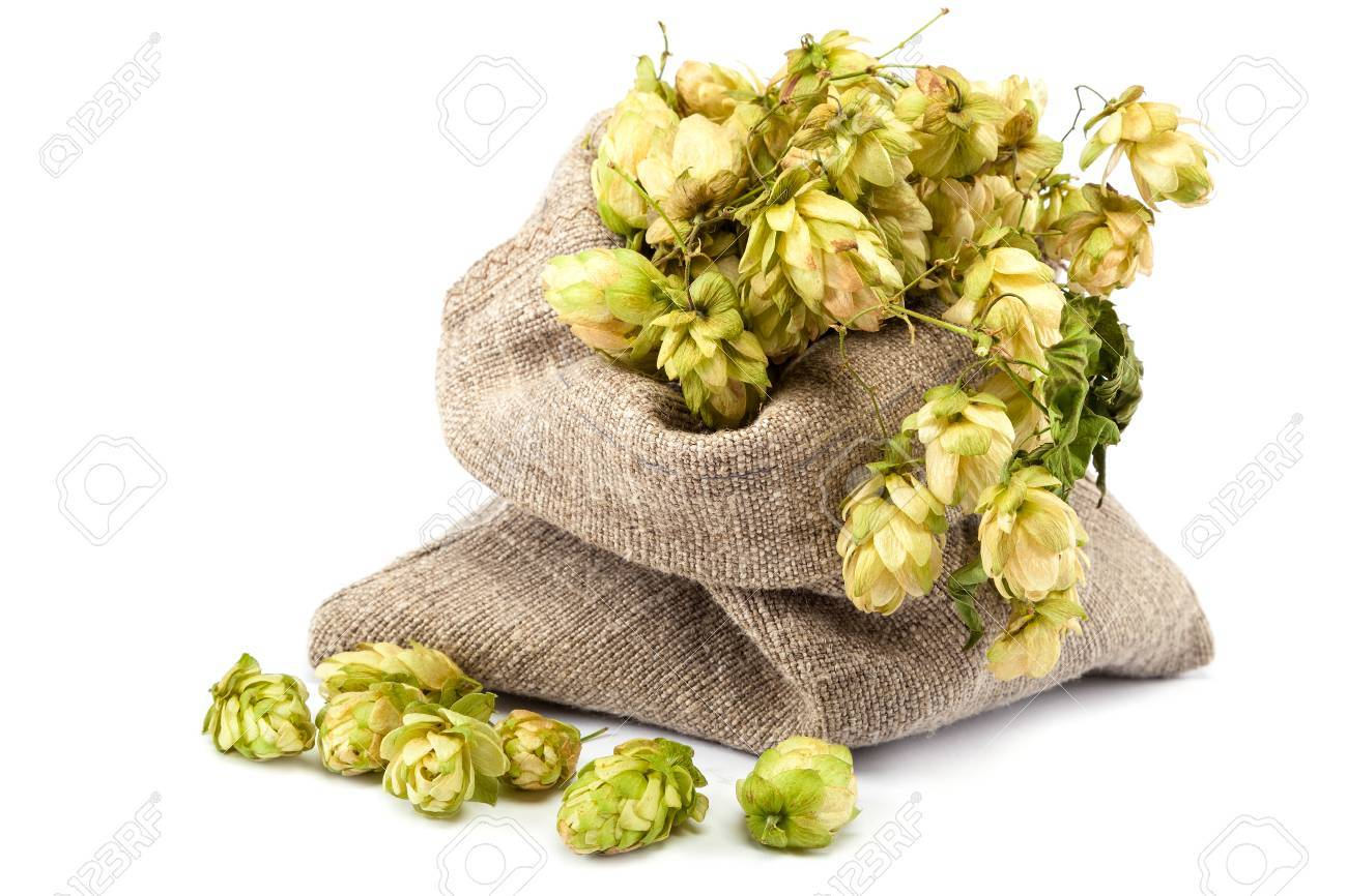 Hops in a canvas sack isolated on white background. - 44923229