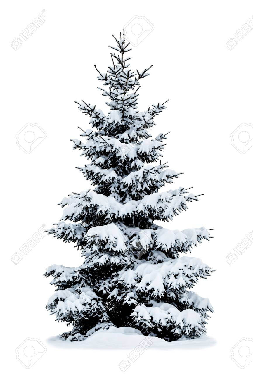 Christmas Tree Snow.Winter Christmas Tree Covered With Snow Isolated On White Background