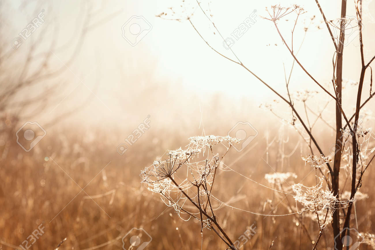 Autumn landscape. Trees, grass, trail, fog, hoarfrost, leaves, water, sunlight - 156573851