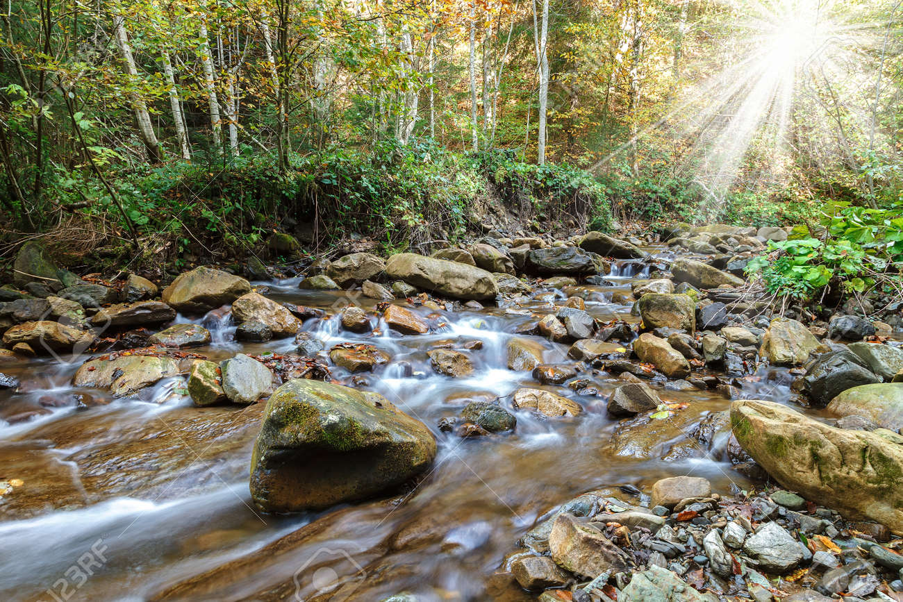 Mountain river creek among stones and trees. - 154785779