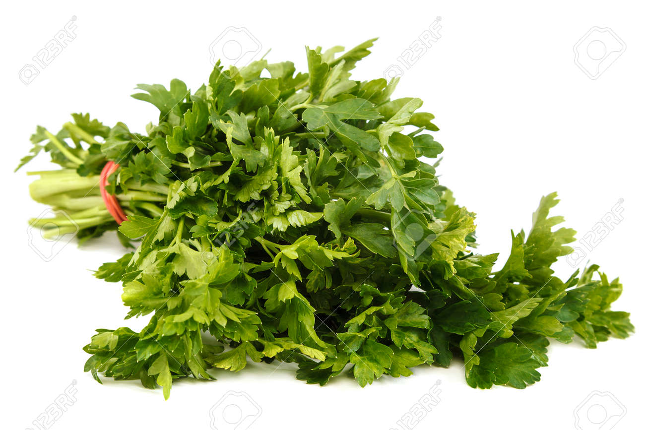 Bunch of fresh parsley isolated on white background. - 157708309