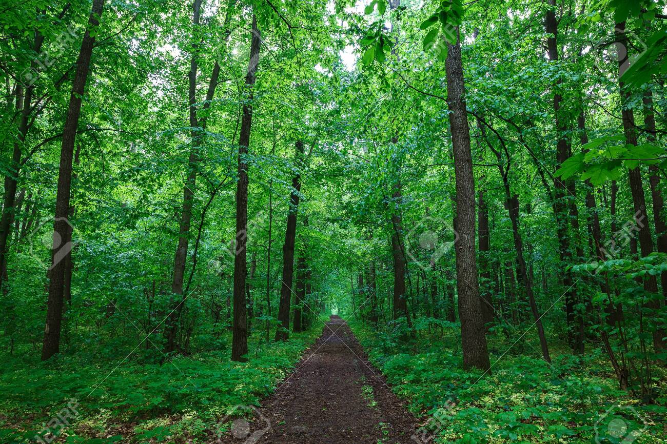 Green spring wet forest with paths and streams. - 154785858