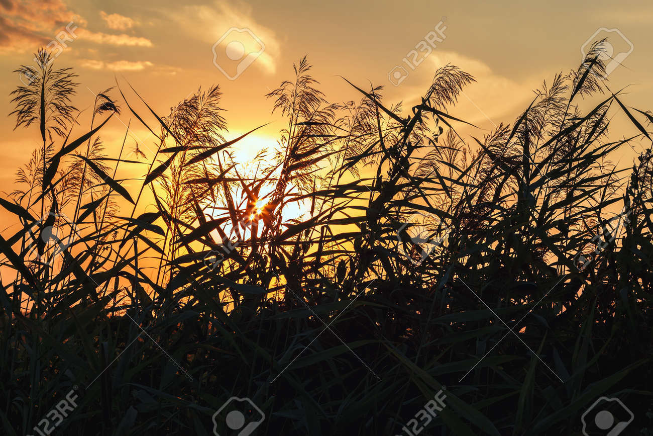 Grass in the meadow against the sky at sunset of the day. - 157708975