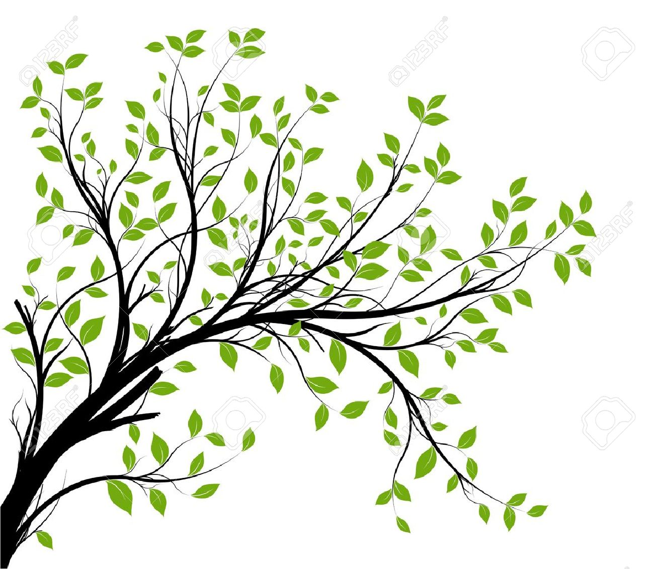 vector - decorative branch silhouette and green leaves, white background - 12490277