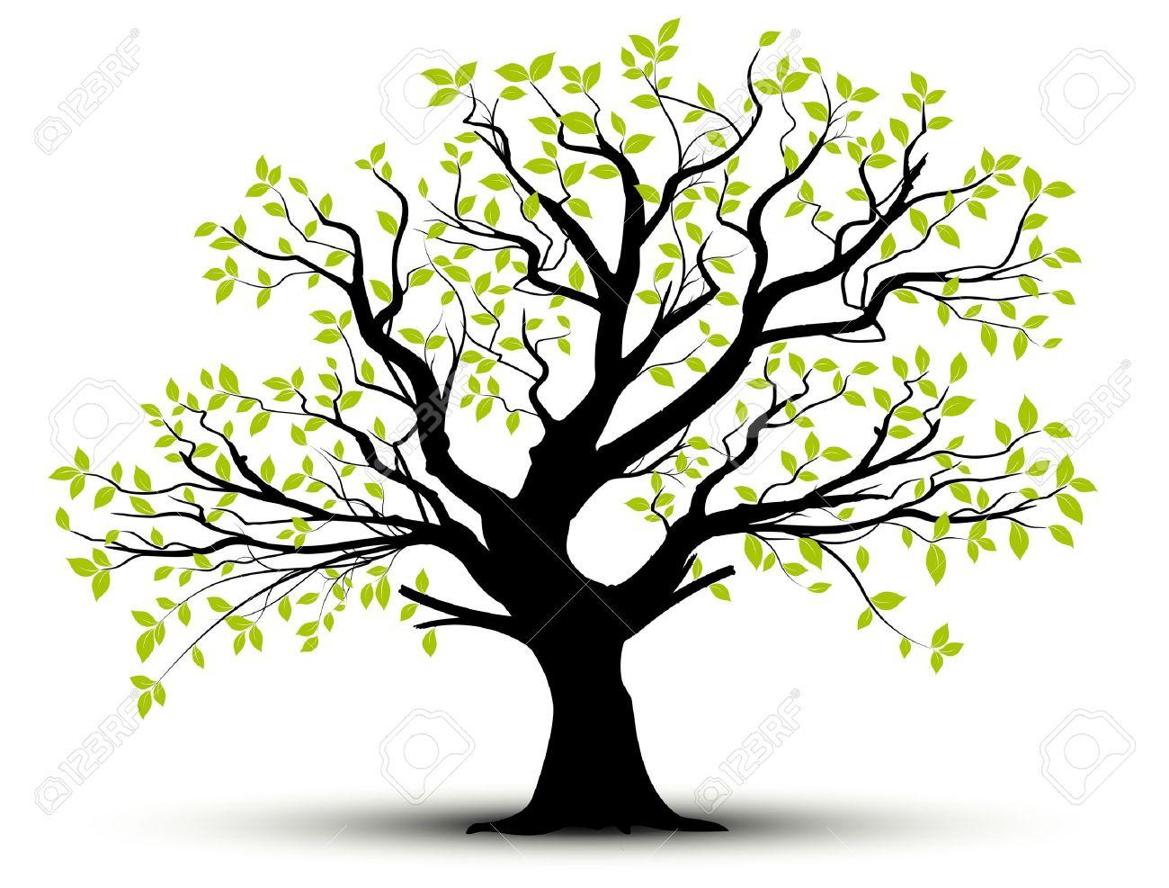 ensemble de vecteurs - arbre décoratif et des feuilles vertes avec