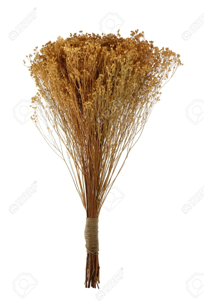 Decorative dried flowers bouquet tied in a bunch isolated on stock decorative dried flowers bouquet tied in a bunch isolated on white stock photo 4440362 izmirmasajfo Images