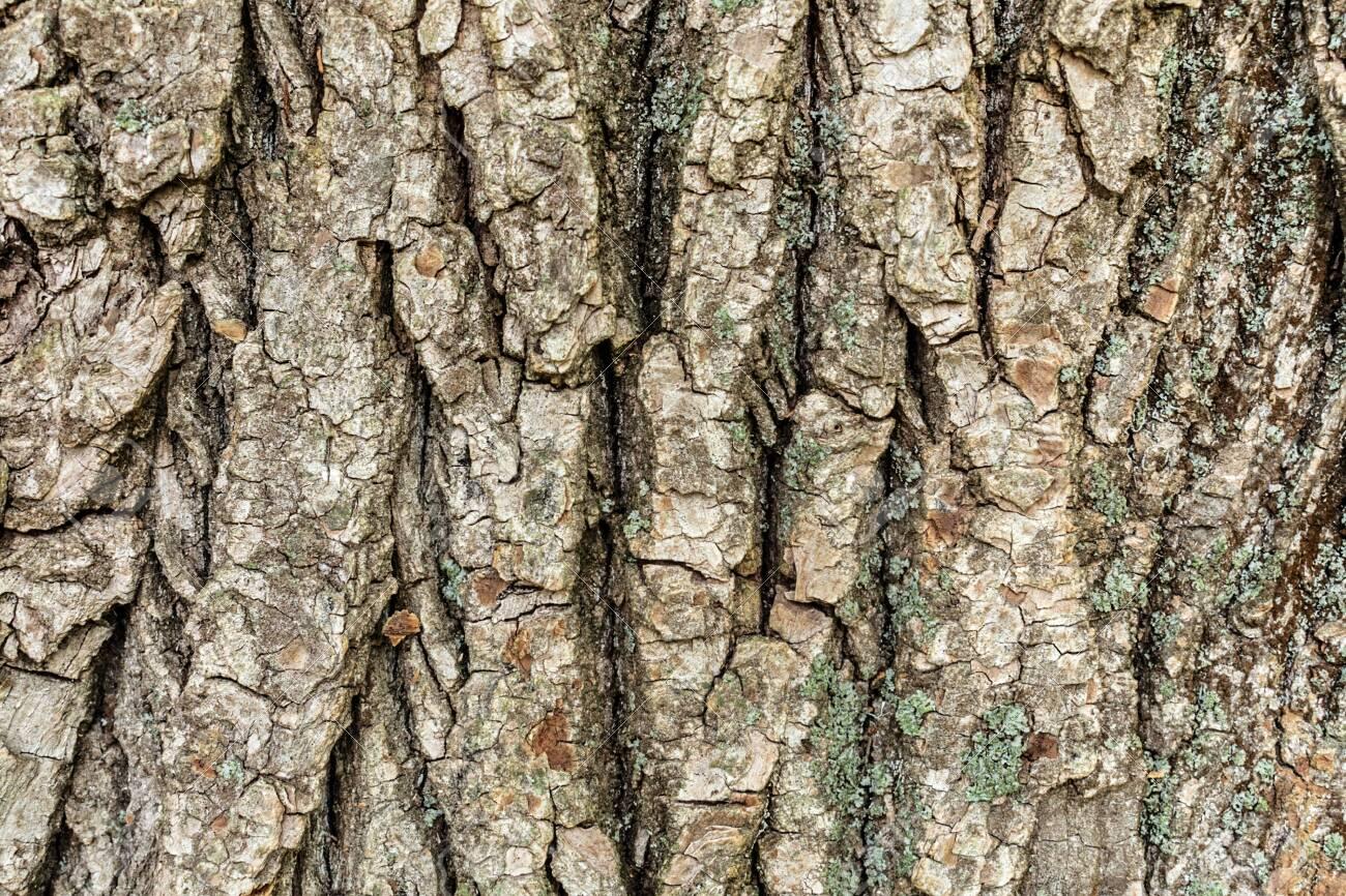 Embossed tree bark background. Tree bark texture. - 153128723