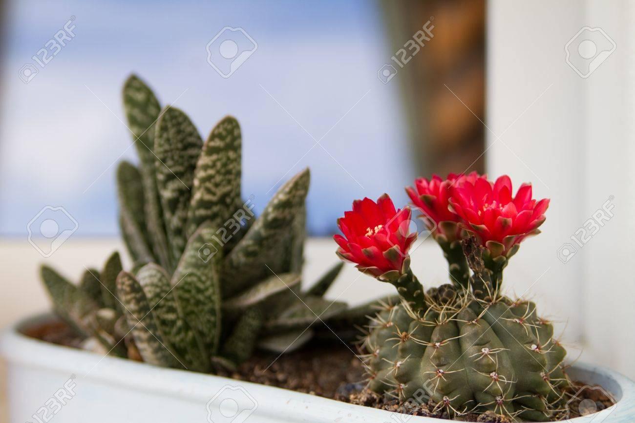 Un Jarron De Flores Blancas Con Plantas Exoticas Fotos Retratos