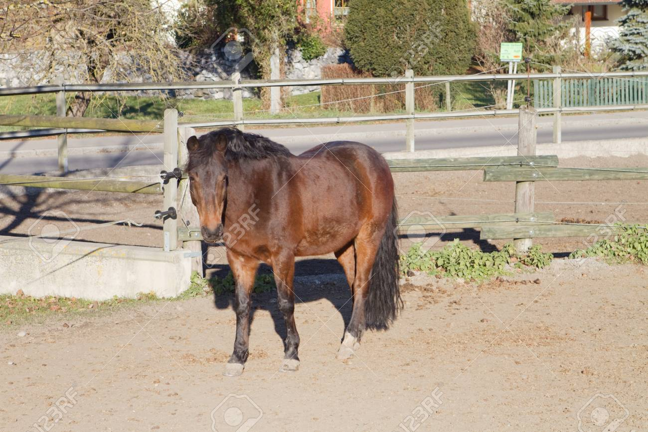 one, brown horse standing in a paddock Stock Photo - 12894117