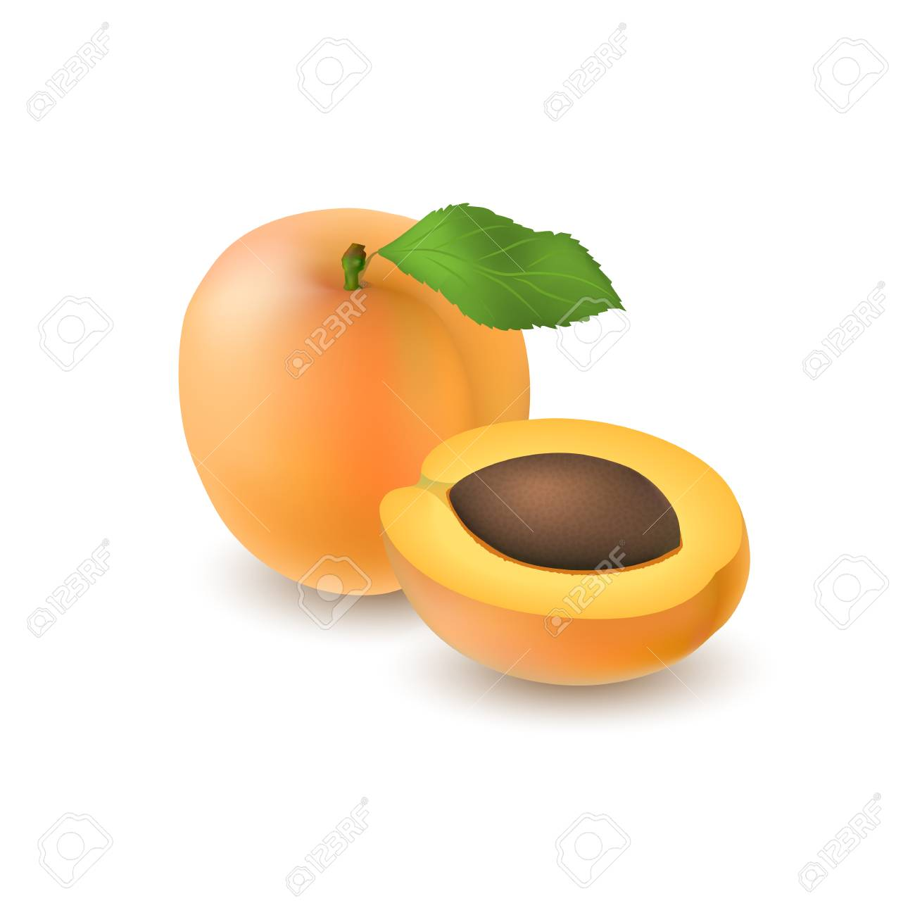 isolated realistic colored whole juicy apricot with stick and
