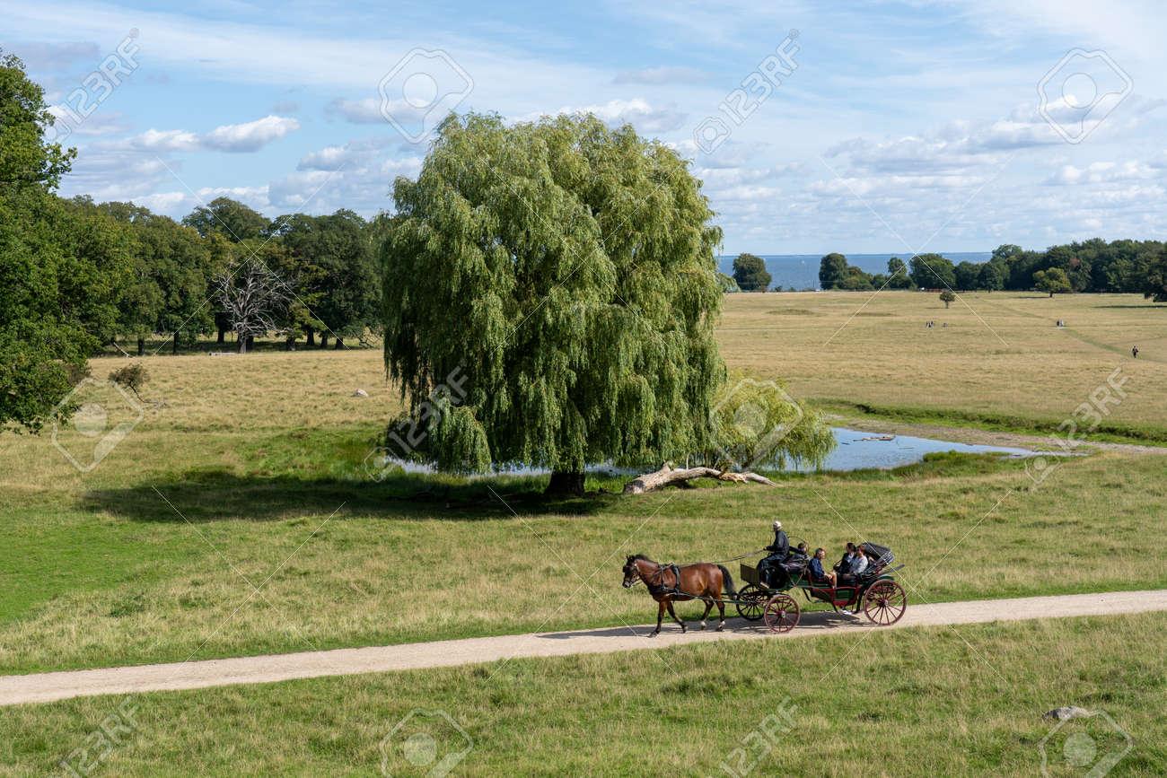 Horse-drawn carriage in Dyrehaven in Copenhagen - 173500163