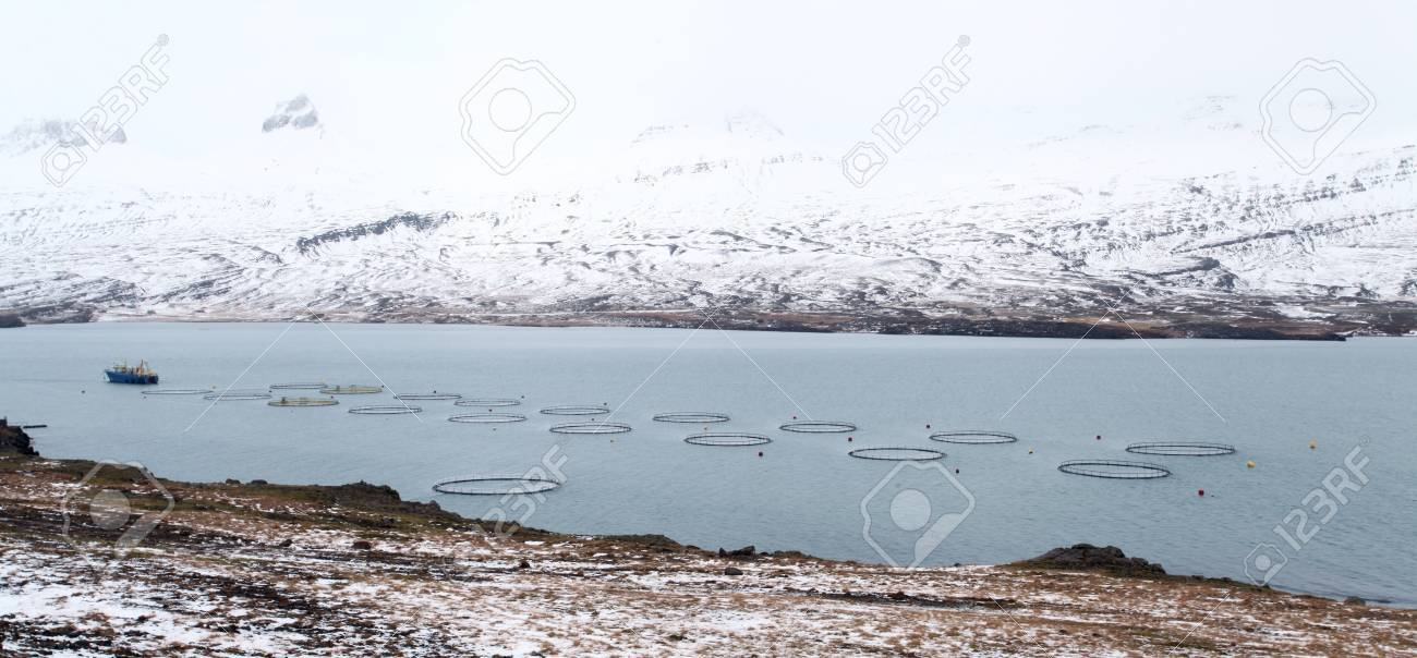 Captivated fish contraversial fish farm in east iceland Stock Photo - 17359304