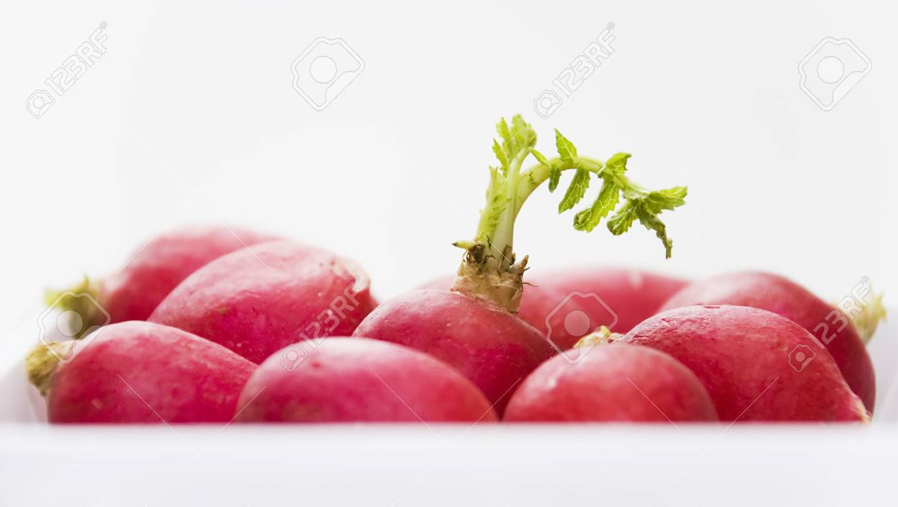 red radish with green sprout on the tray Stock Photo - 5628917