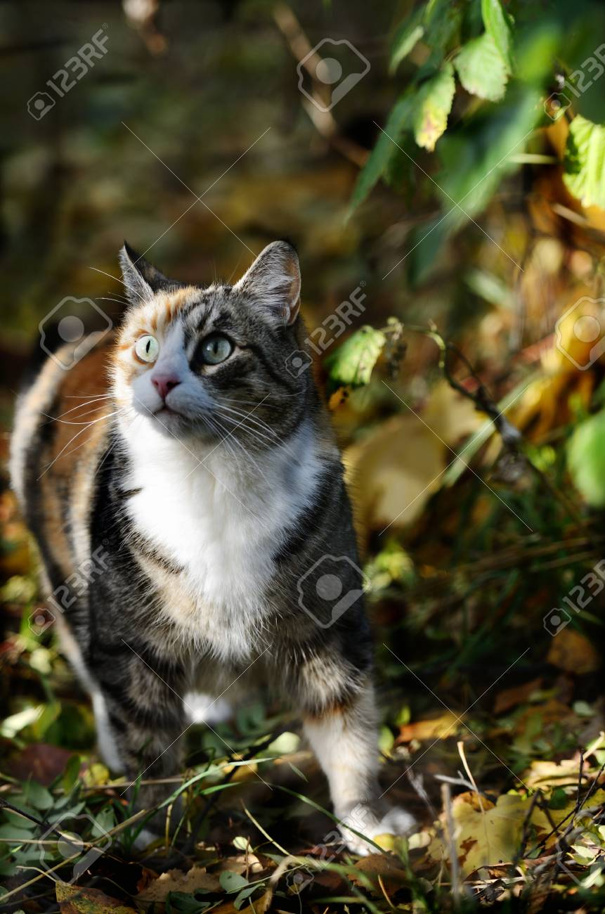 cat curiously looking up in the forest Stock Photo - 23011506