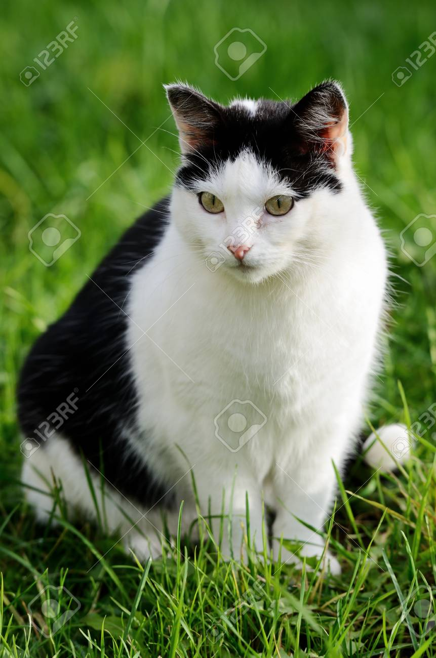 cat curiously looking forward against green background Stock Photo - 25299088