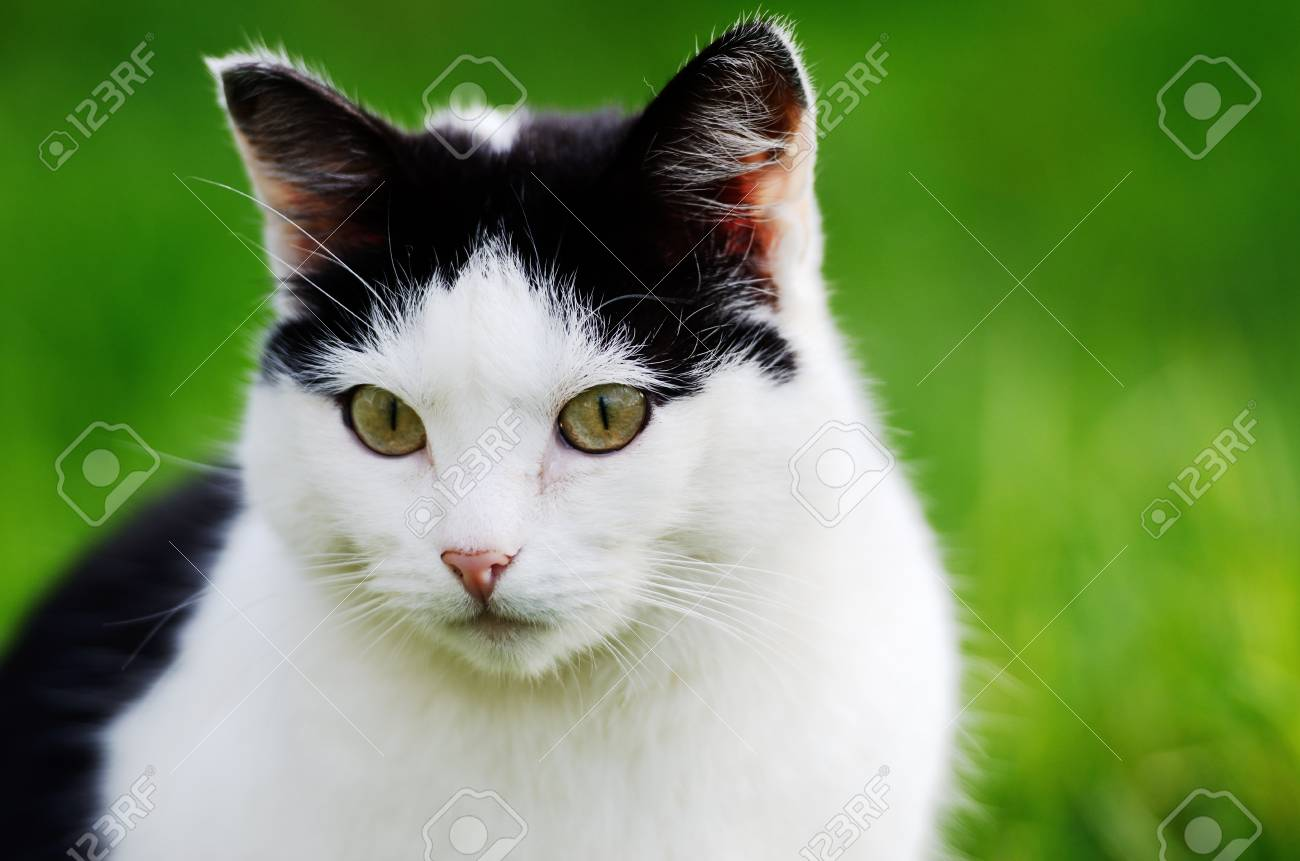 cat curiously looking forward against green background Stock Photo - 25299089