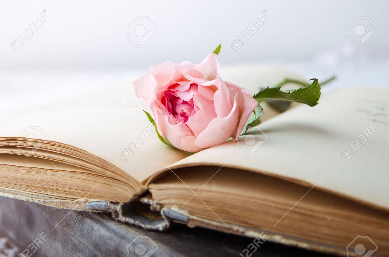 pink rose on an open old book - 35804079