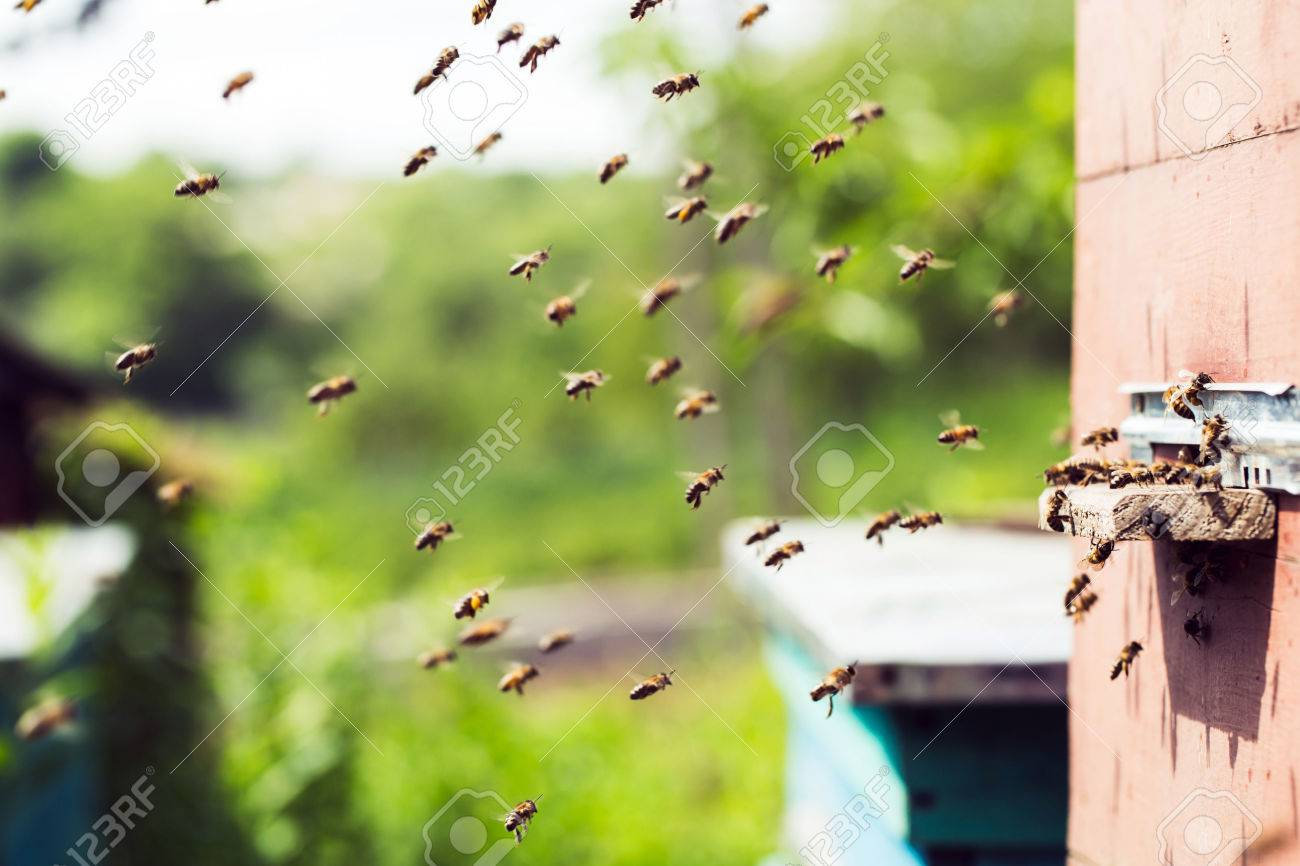 Honey bees swarming and flying around their beehive - 40863280