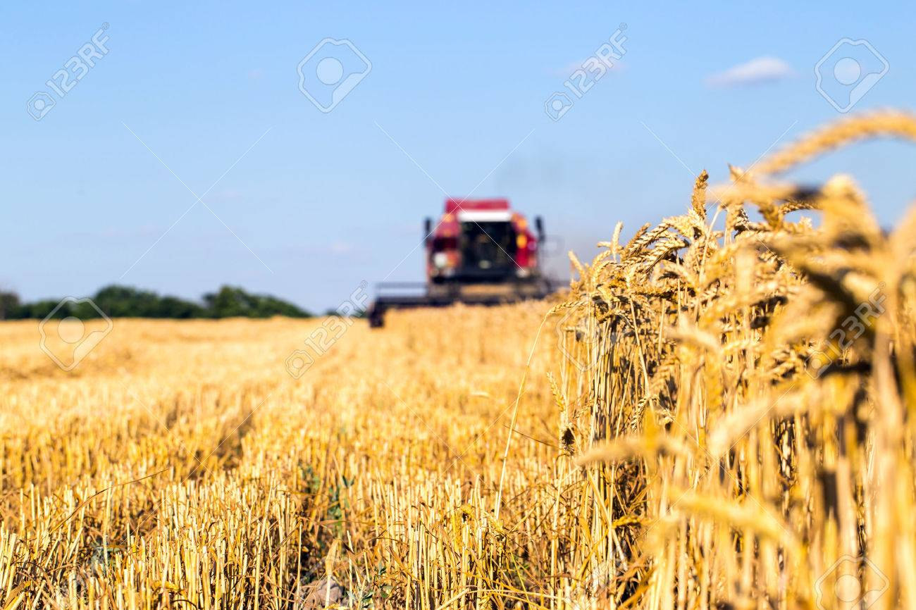 Photo of combine harvester that is harvesting wheat - 43405178