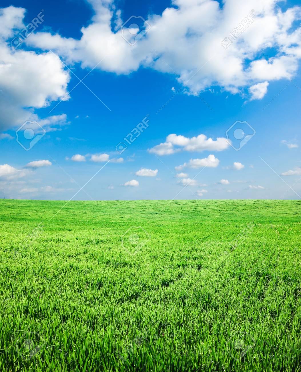 green spring field Stock Photo - 3368500
