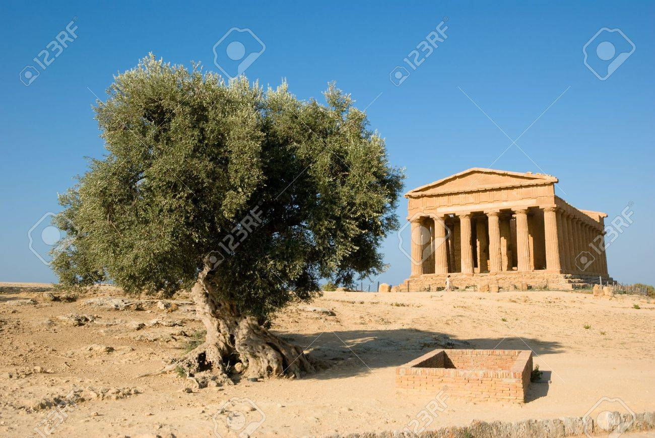 doric temple of Concordia in Agrigento with olive tree Stock Photo - 3579200