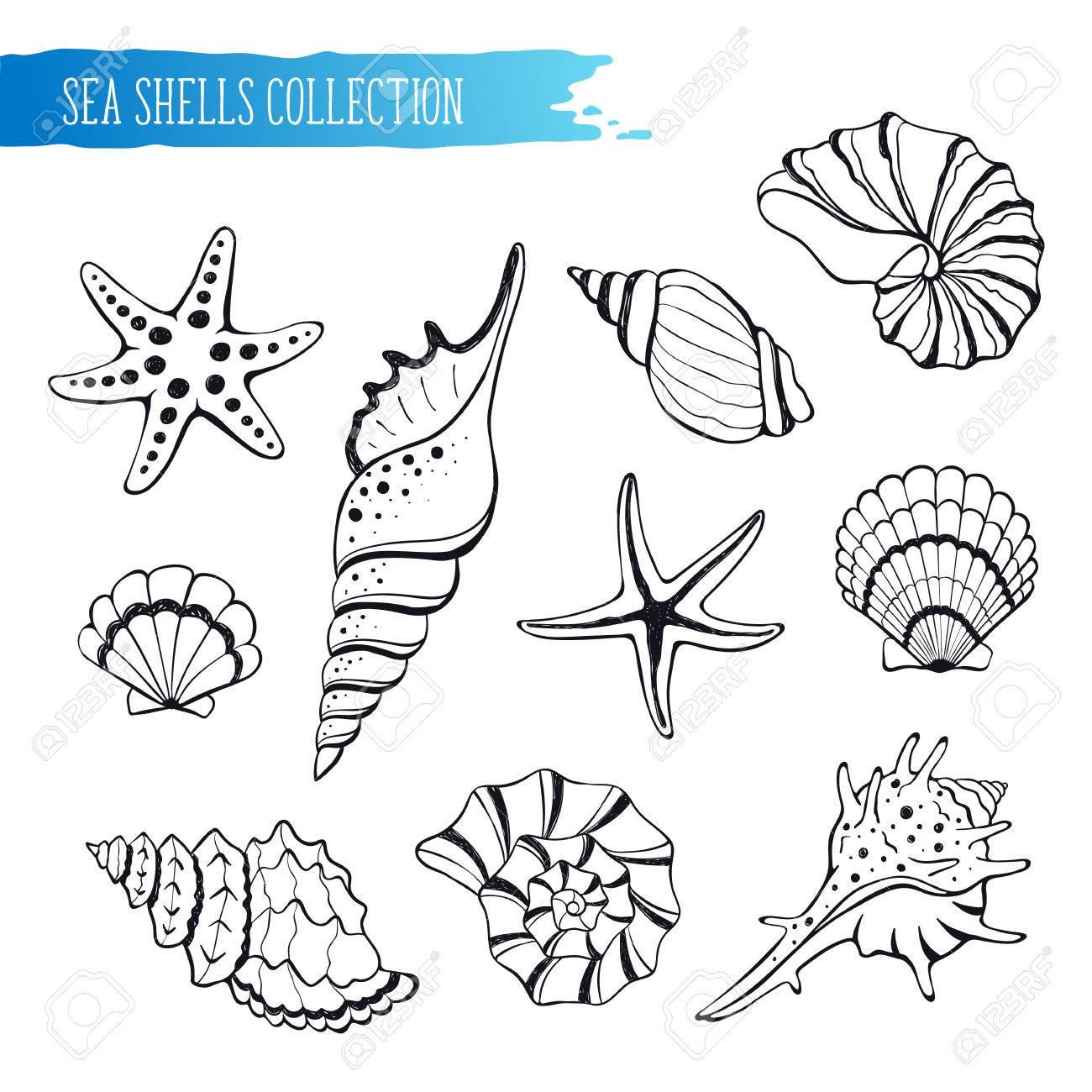Dibujados A Mano Conchas De Mar Y Estrellas De Recogida. Ilustración ...