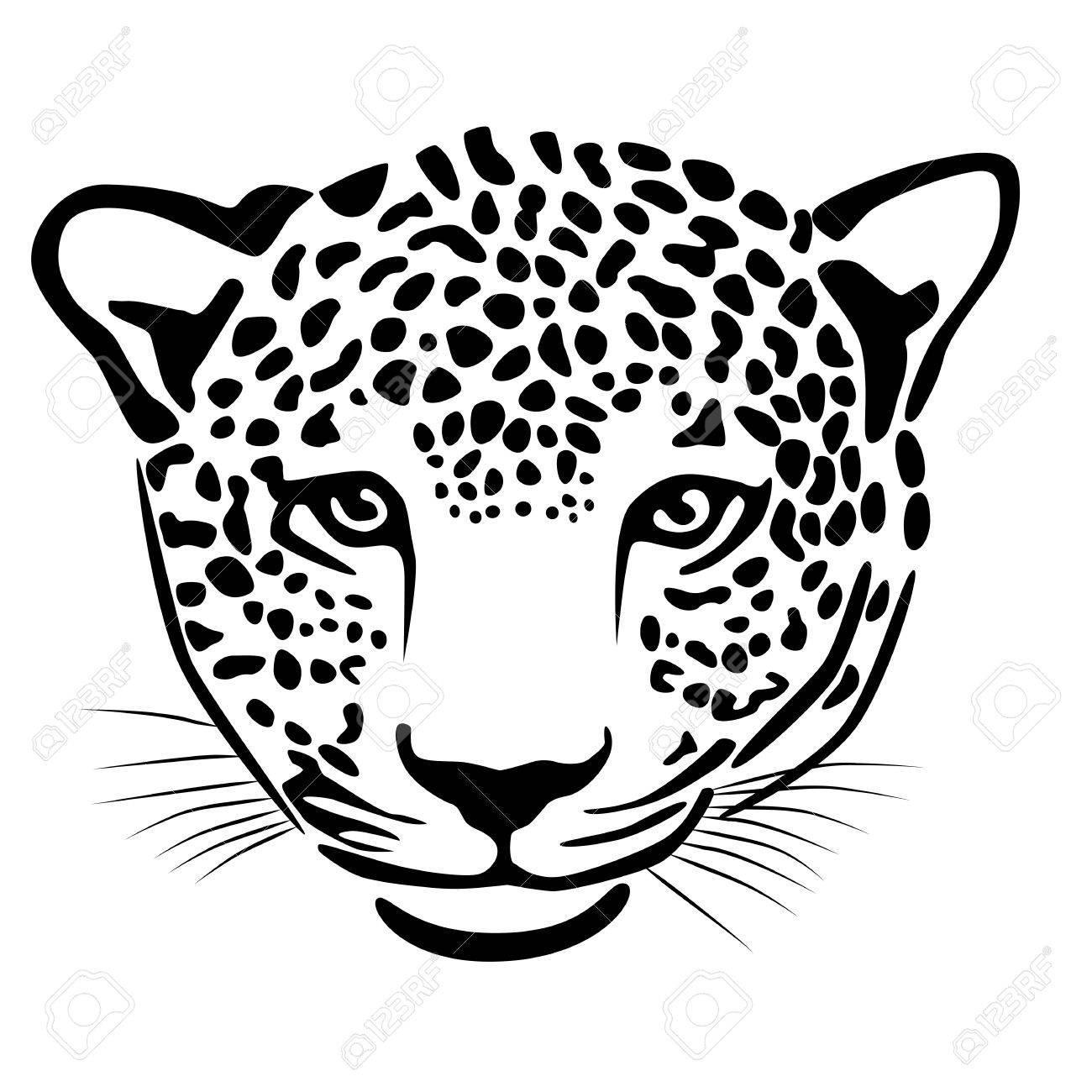 Illustration of leopard isolated on white Stock Vector - 19360481
