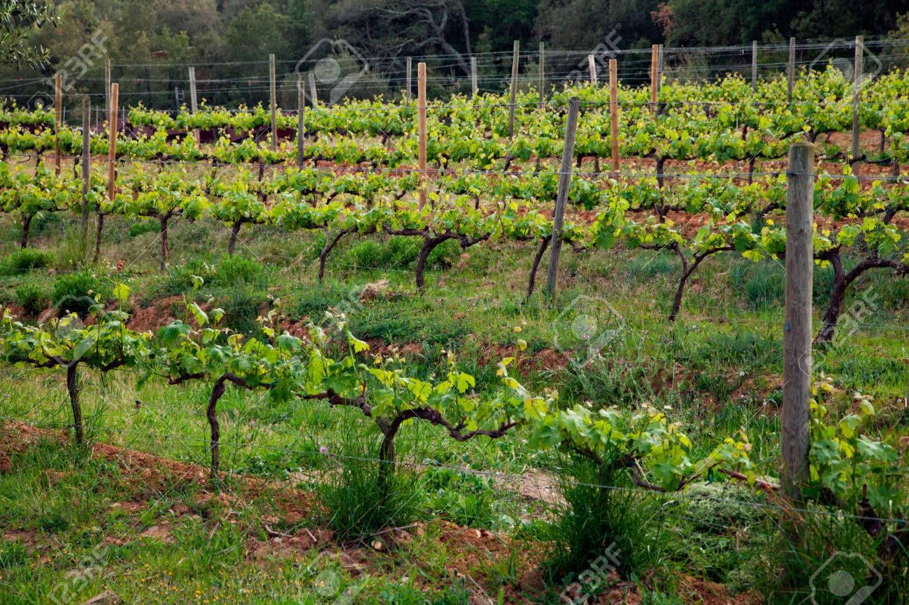 Champ De Vigne l'espagne région viticole, les champs de vigne banque d'images et