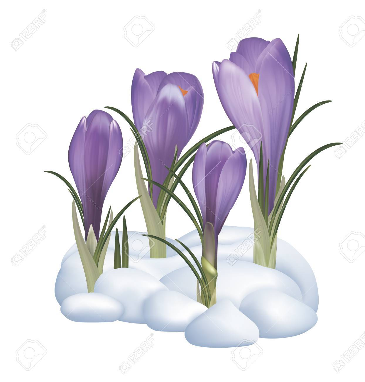 Spring Snow Clipart