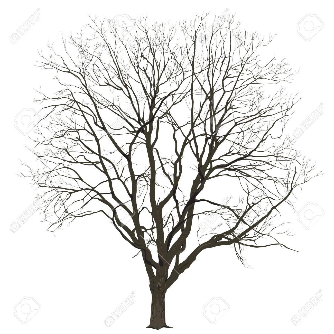 Ziemlich Kahler Baum Umriss Färbung Seite Ideen - Entry Level Resume ...