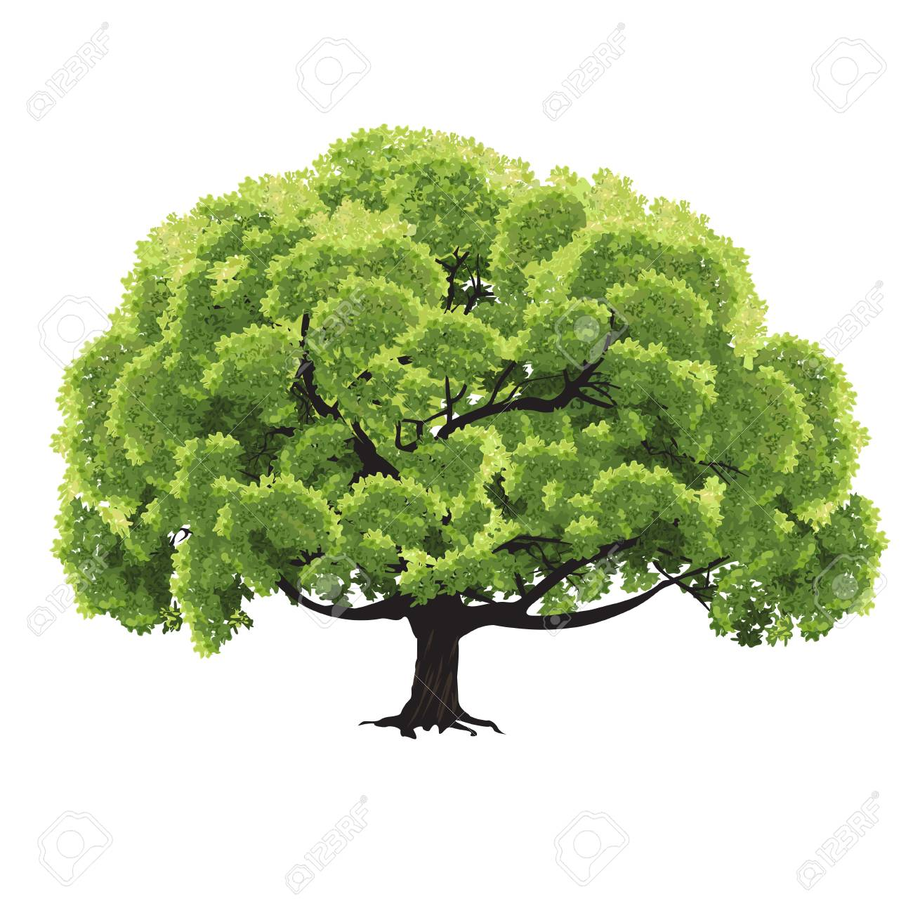 Big Tree With Green Foliage In The Summer, The Color Vector Drawing ...