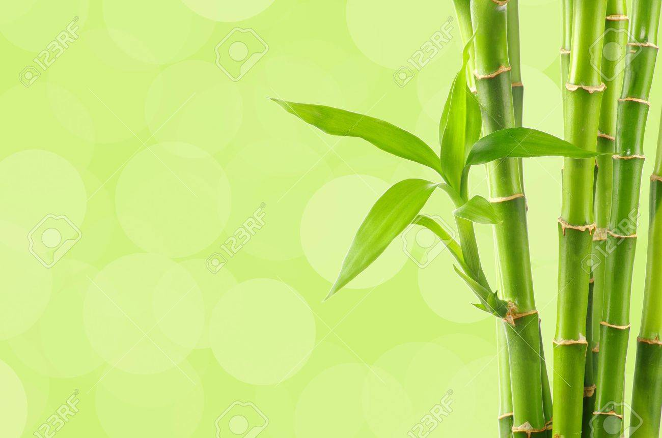 b39e0097daa9 Beautiful Bamboo Border Stock Photo - 12862582