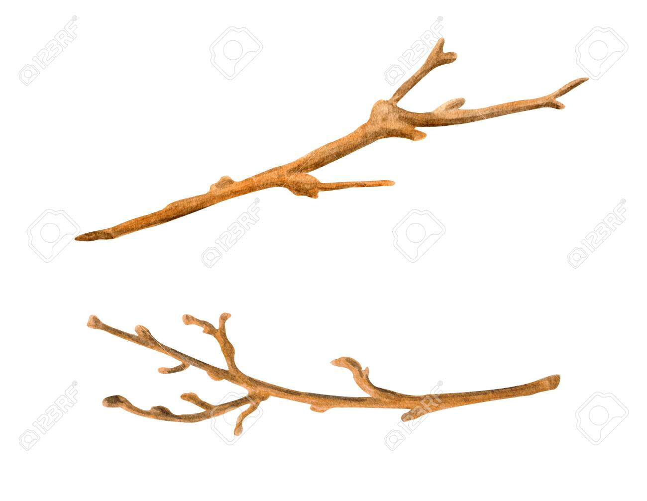 Watercolor Dry Tree Branches Set Hand Painted Bare Twigs And Stock Photo Picture And Royalty Free Image Image 153351763