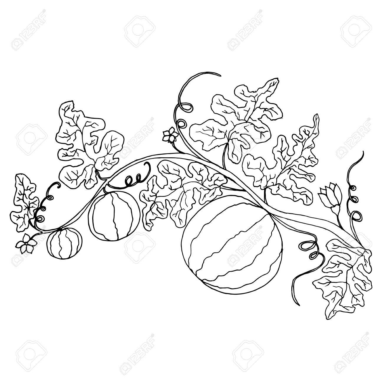 Cartoon Black And White Watermelon In Foliage And Flowers Isolated