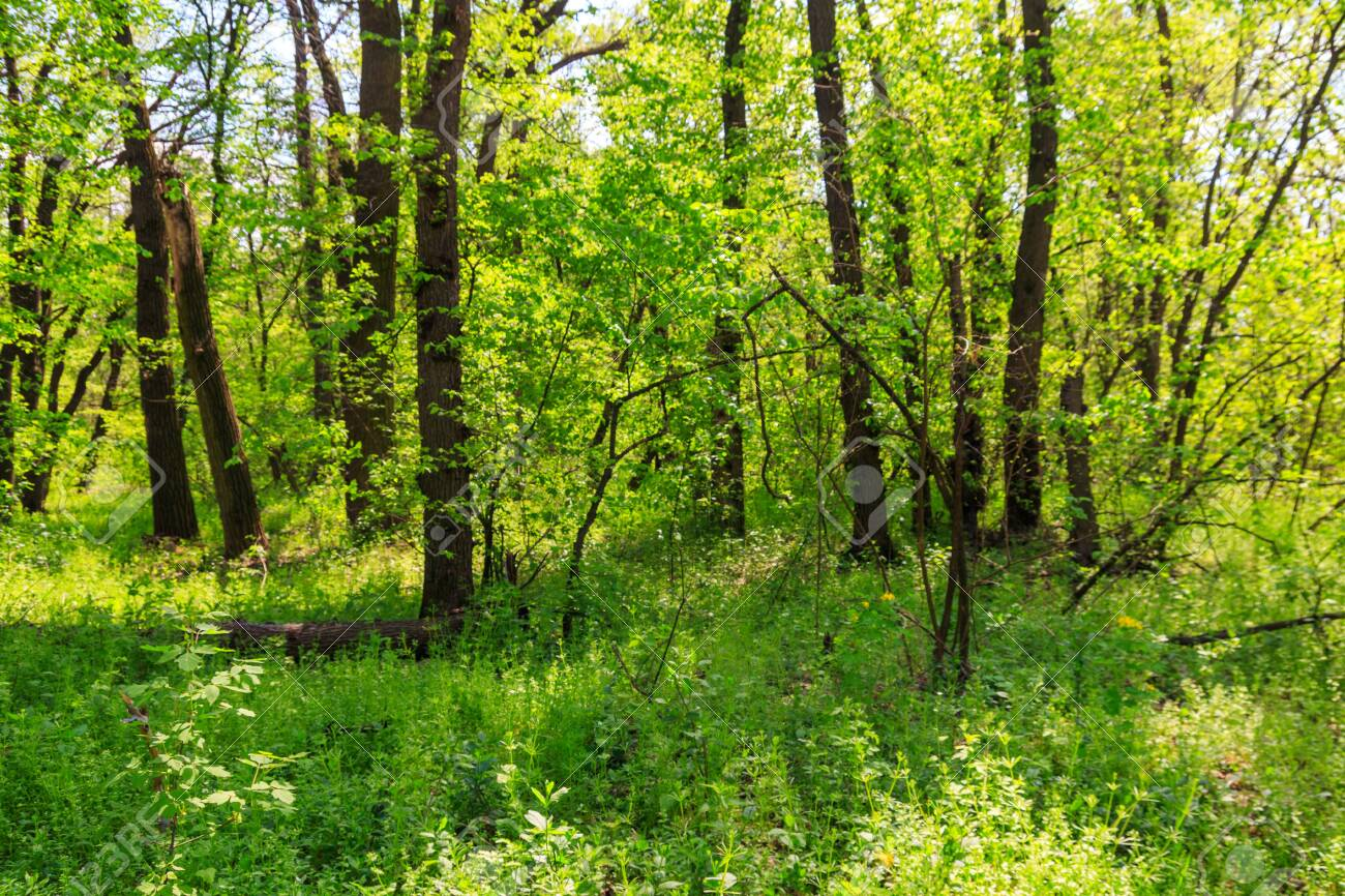 View of green forest at spring - 123209595