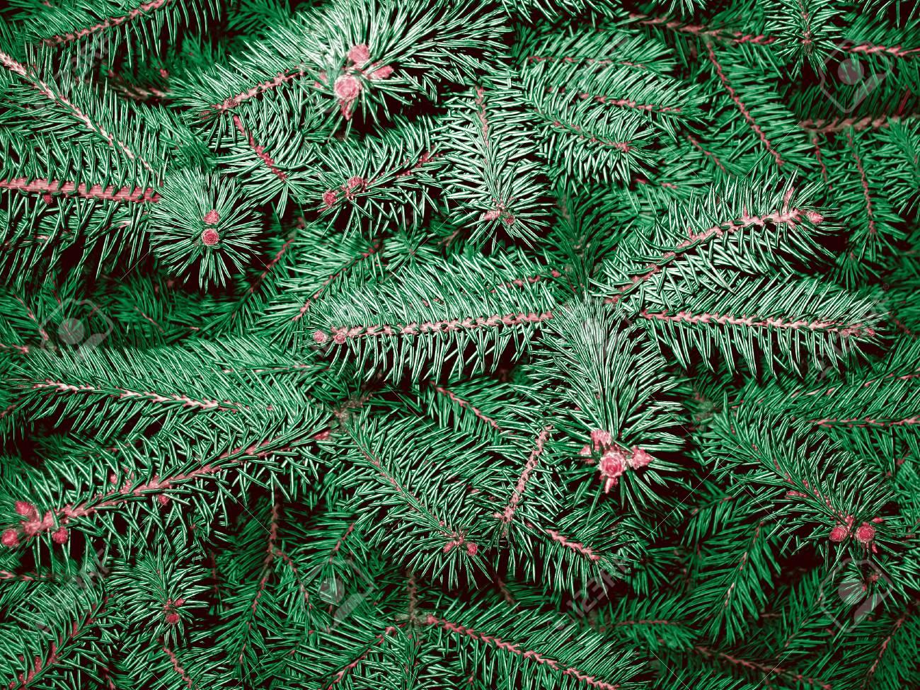 Weihnachtsbaum Nadeln.Stock Photo