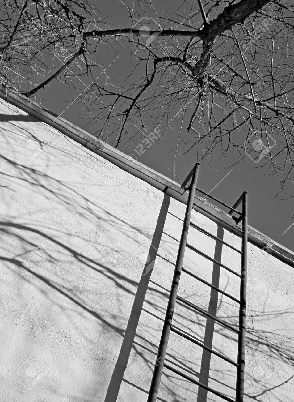 Fire Escape Shadow Tree On House Black And White Frame One