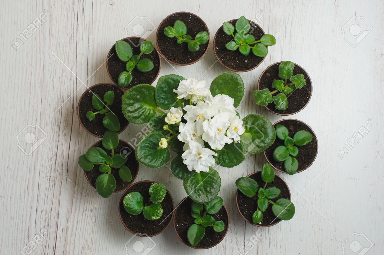 Indoor Flower Pots. Keybox 3pcs Stackable Garden Planter Herb ...