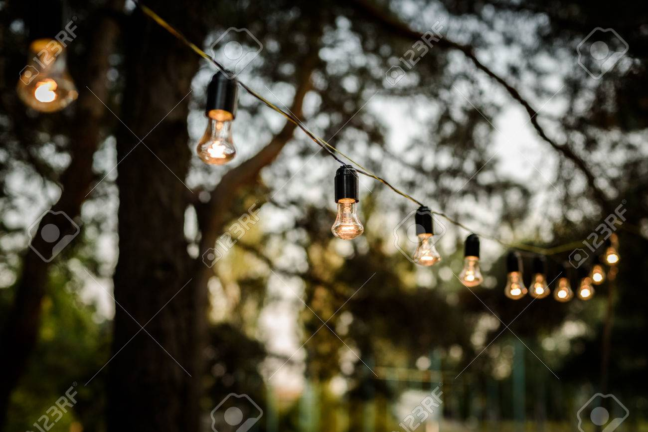 The Strand Of Lights Strung In The Forest Among Trees, Wedding ...
