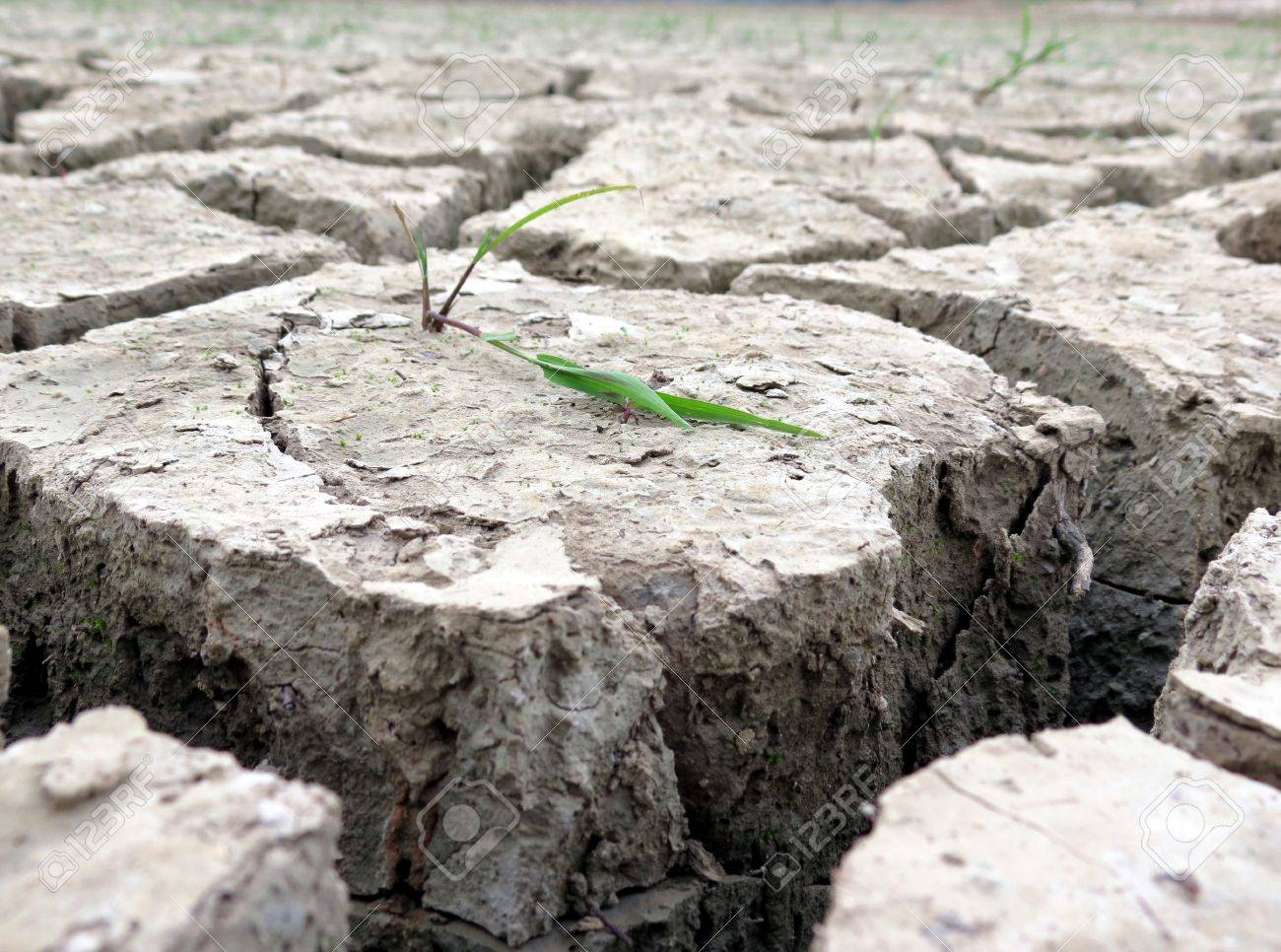 Plant in dried cracked ground Stock Photo - 15649150