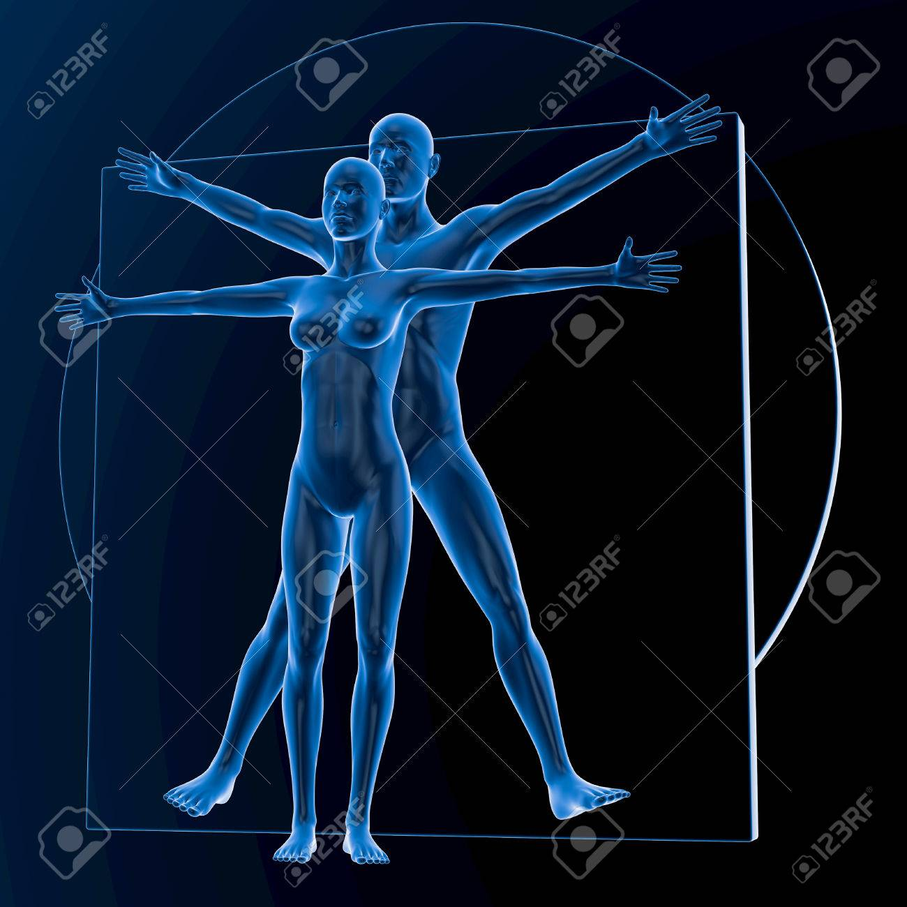 Leonardo Da Vinci Vitruvian Man And Woman, Couple, Translucent ...