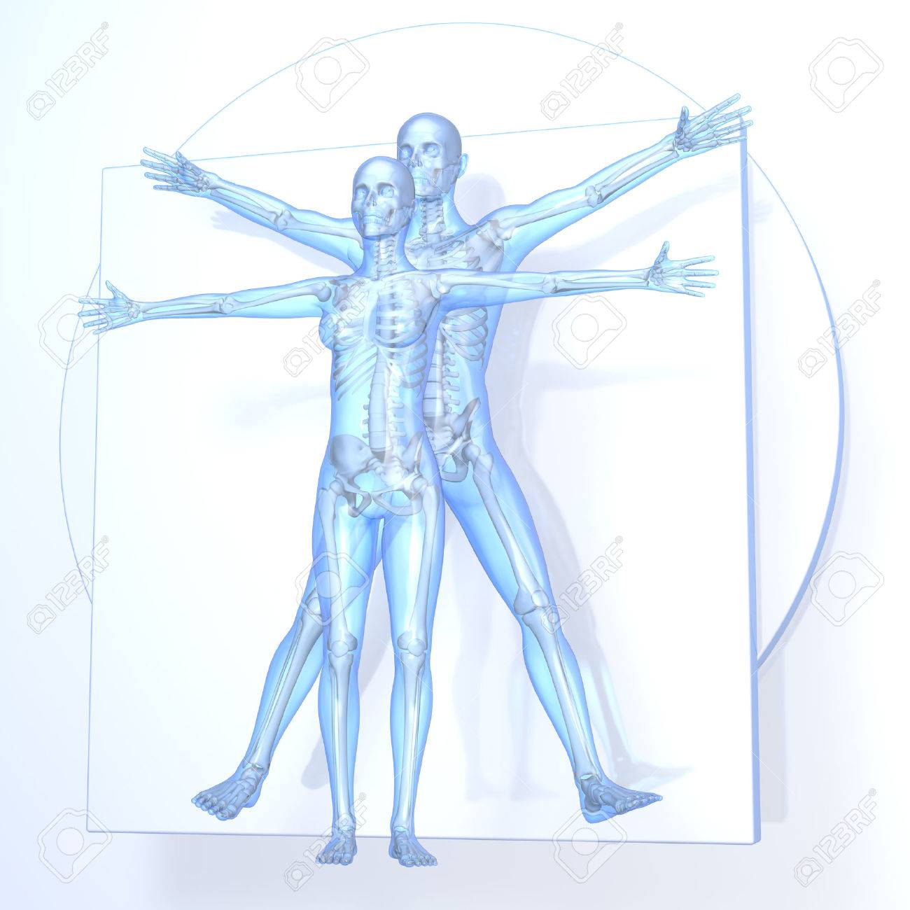 Leonardo Da Vinci Vitruvian Man And Woman, Couple, Transparent ...