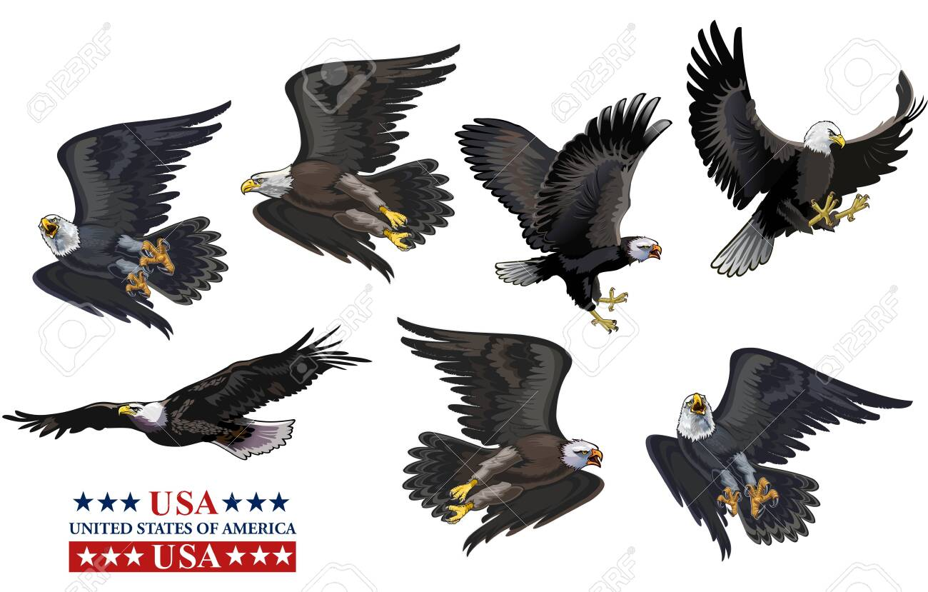 American eagle (bald eagle) and flag - 156391130