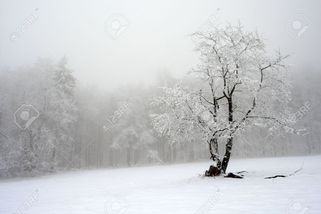 Solitary tree in winter, snowy landscape with snow and fog, foggy forest in the backgroud - 51632236