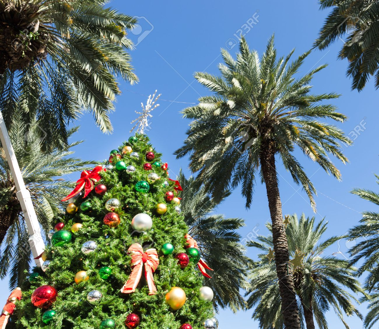 Christmas Tree In Miami Stock Photo, Picture And Royalty Free ...