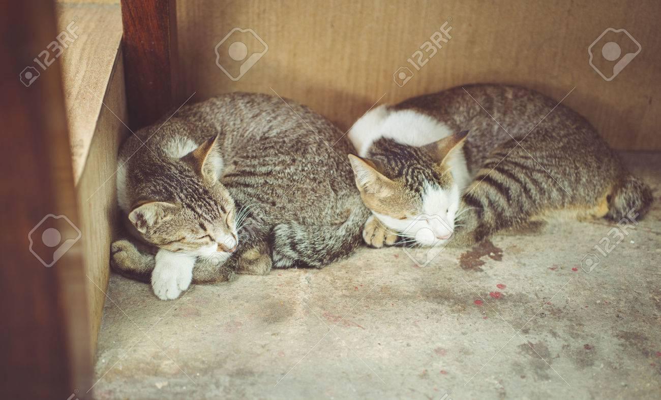 Banque dimages , deux chats qui dorment ensemble. notion sur les animaux et les animaux de compagnie