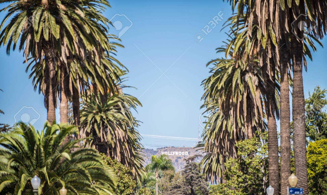 Hollywood Sign With Palm Trees In The Foreground California Stock Photo